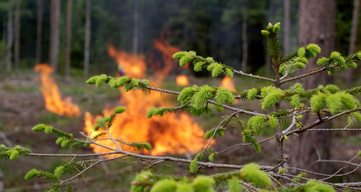 Fortsatt totalforbud mot grilling og bruk av åpen ild i, og i nærheten av skog og mark.
